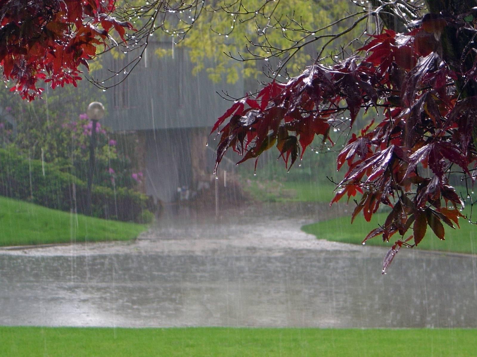 عکس باران پاییزی متحرک